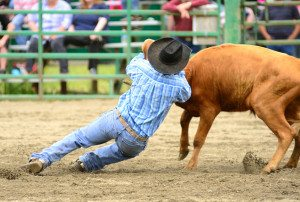 Steer Wrestling event at the South Douglas Rodeo. June 12, 2011 in Myrtle Creek, OR
